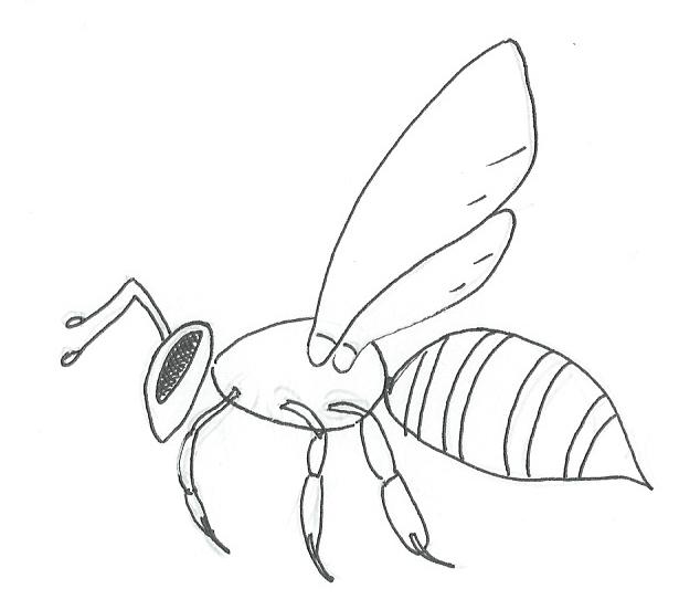 Produzione di miele (1/6)