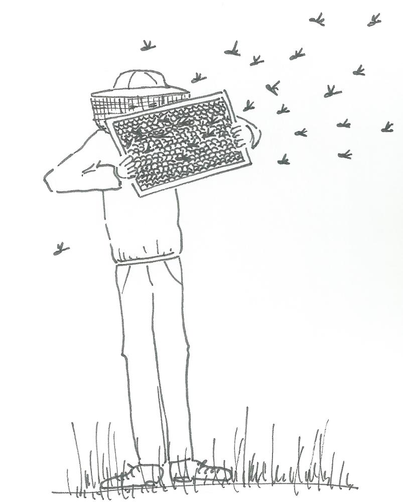 Come facciamo il miele (2/3)