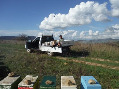 pabo furgone