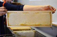 telaino pieno di miele